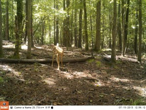 2013_REVIEWSAMPLE_BUSHNELL_TROPHYCAMHDMAX_0012