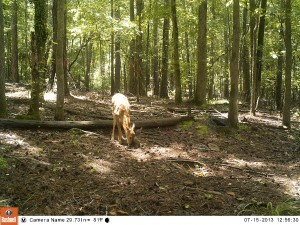 2013_REVIEWSAMPLE_BUSHNELL_TROPHYCAMHDMAX_0013