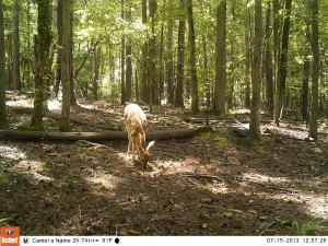 2013_REVIEWSAMPLE_BUSHNELL_TROPHYCAMHDMAX_0014