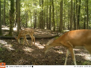 2013_REVIEWSAMPLE_BUSHNELL_TROPHYCAMHDMAX_0015