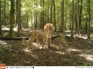 2013_REVIEWSAMPLE_BUSHNELL_TROPHYCAMHDMAX_0016