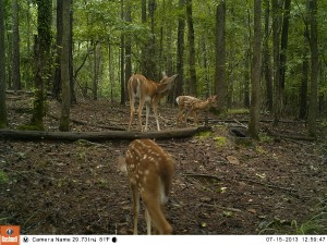 2013_REVIEWSAMPLE_BUSHNELL_TROPHYCAMHDMAX_0018