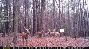 2013_REVIEWRANGE_MOULTRIE_M-990_0003