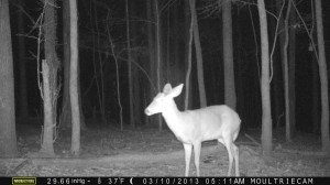 2013_REVIEWSAMPLE1_MOULTRIE_M-990_0006