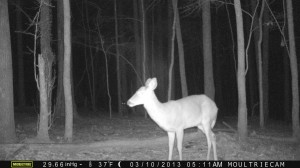 2013_REVIEWSAMPLE1_MOULTRIE_M-990_0007