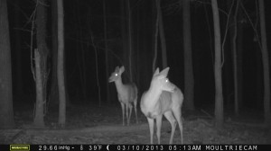 2013_REVIEWSAMPLE1_MOULTRIE_M-990_0008