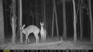 2013_REVIEWSAMPLE1_MOULTRIE_M-990_0009