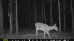 2013_REVIEWSAMPLE1_MOULTRIE_M-990_0010