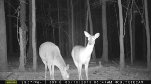 2013_REVIEWSAMPLE1_MOULTRIE_M-990_0011