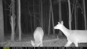 2013_REVIEWSAMPLE1_MOULTRIE_M-990_0012
