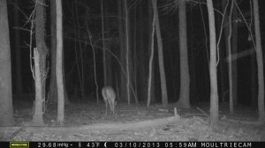 2013_REVIEWSAMPLE1_MOULTRIE_M-990_0013