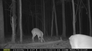 2013_REVIEWSAMPLE1_MOULTRIE_M-990_0014