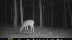 2013_REVIEWSAMPLE1_MOULTRIE_M-800_0001