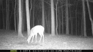 2013_REVIEWSAMPLE1_MOULTRIE_M-800_0002