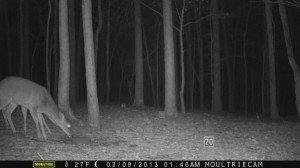 2013_REVIEWSAMPLE1_MOULTRIE_M-800_0003