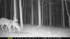 2013_REVIEWSAMPLE1_MOULTRIE_M-800_0004