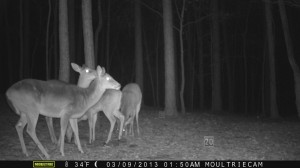 2013_REVIEWSAMPLE1_MOULTRIE_M-800_0005