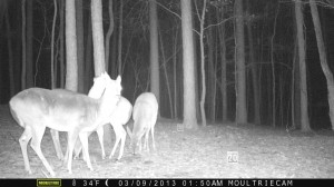 2013_REVIEWSAMPLE1_MOULTRIE_M-800_0006