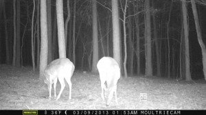 2013_REVIEWSAMPLE1_MOULTRIE_M-800_0007