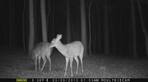 2013_REVIEWSAMPLE1_MOULTRIE_M-800_0008