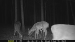 2013_REVIEWSAMPLE1_MOULTRIE_M-800_0009