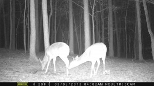 2013_REVIEWSAMPLE1_MOULTRIE_M-800_0010