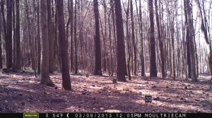 2013_REVIEWSAMPLE1_MOULTRIE_M-800_0011