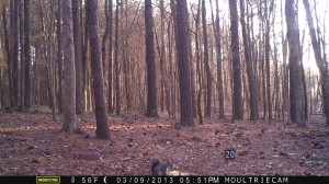 2013_REVIEWSAMPLE1_MOULTRIE_M-800_0013