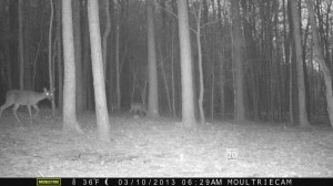 2013_REVIEWSAMPLE1_MOULTRIE_M-800_0015