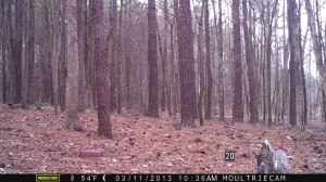 2013_REVIEWSAMPLE2_MOULTRIE_M-800_0002