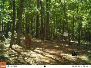2014_REVIEWRANGE_BUSHNELL_Trophy Cam 119636_0007