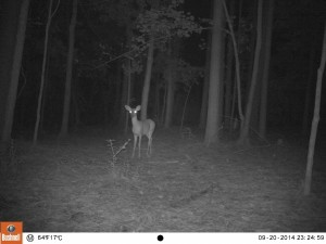 2014_REVIEWSAMPLE_BUSHNELL_Trophy Cam 119636_0039