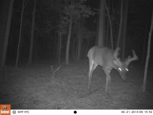 2014_REVIEWSAMPLE_BUSHNELL_Trophy Cam 119636_0047