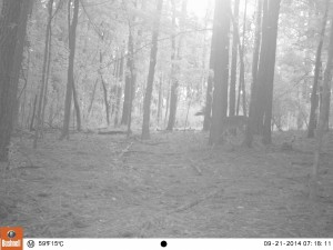 2014_REVIEWSAMPLE_BUSHNELL_Trophy Cam 119636_0050