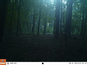 2014_REVIEWSAMPLE_BUSHNELL_Trophy Cam 119636_0054