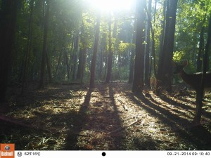 2014_REVIEWSAMPLE_BUSHNELL_Trophy Cam 119636_0074