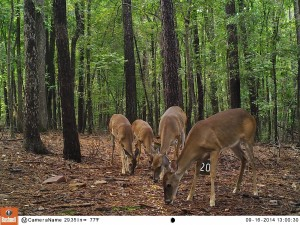 2014_REVIEWSAMPLE_BUSHNELL_Trophy Cam HD Max 119678_0007