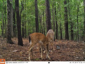 2014_REVIEWSAMPLE_BUSHNELL_Trophy Cam HD Max 119678_0008