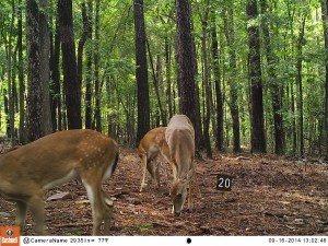2014_REVIEWSAMPLE_BUSHNELL_Trophy Cam HD Max 119678_0009