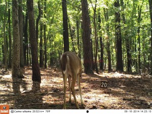 2014_REVIEWSAMPLE_BUSHNELL_Trophy Cam HD Max 119678_0010