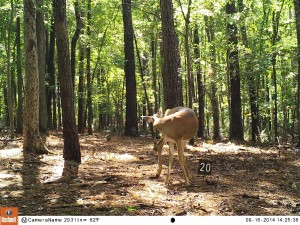 2014_REVIEWSAMPLE_BUSHNELL_Trophy Cam HD Max 119678_0012