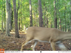 2014_REVIEWSAMPLE_BUSHNELL_Trophy Cam HD Max 119678_0016