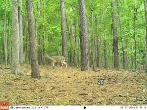 2014_REVIEWSAMPLE_BUSHNELL_Trophy Cam HD Max 119678_0017