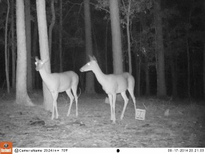 2014_REVIEWSAMPLE_BUSHNELL_Trophy Cam HD Max 119678_0019