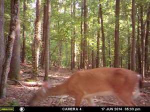 2014_REVIEWSAMPLE_MOULTRIE_A8_0001