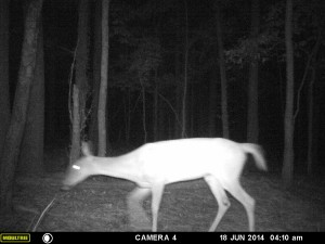 2014_REVIEWSAMPLE_MOULTRIE_A8_0003