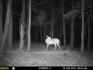 2014_REVIEWSAMPLE_MOULTRIE_A8_0007