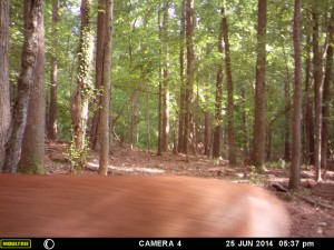 2014_REVIEWSAMPLE_MOULTRIE_A8_0010