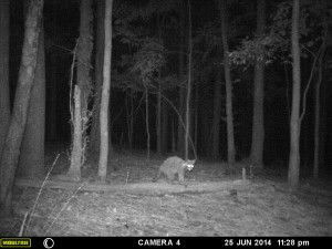 2014_REVIEWSAMPLE_MOULTRIE_A8_0012