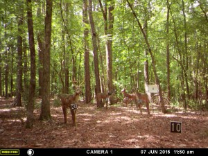 2015_REVIEWRANGE_MOULTRIE_A-5_0012
